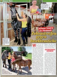 Zebra Pferde Hof-Schierenbeck